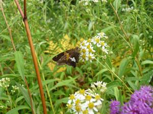 Butterfly01-800x600