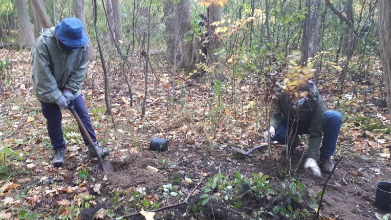 INVASIVE PLANT REMOVAL IN THE FOREST