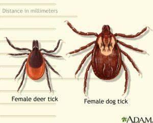 Ticks in Malcolmson